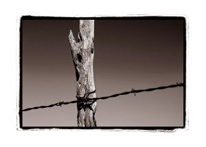 c28-Barbed-Wire_Sepia_Web.jpg