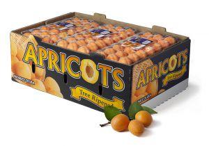 Apricot-FancyBox_8466_2.jpg