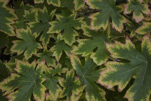 AutumnLeaves_1080.jpg