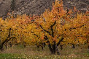 AutumnOrchard_8023_Web.jpg