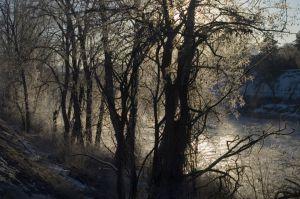 BacklitTrees_River.jpg