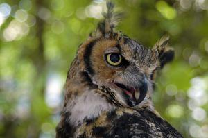 Owl_1_0136.jpg