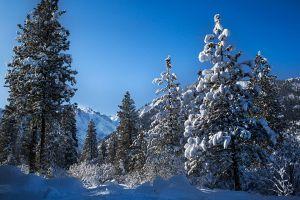 Winter-Scene_Enchantments_Web.jpg