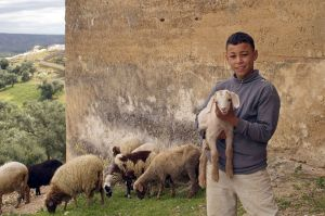 Morocco_Boy_960.jpg